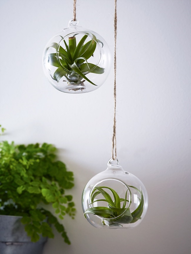 glass hanging plant pot holders, air plant, cox and cox